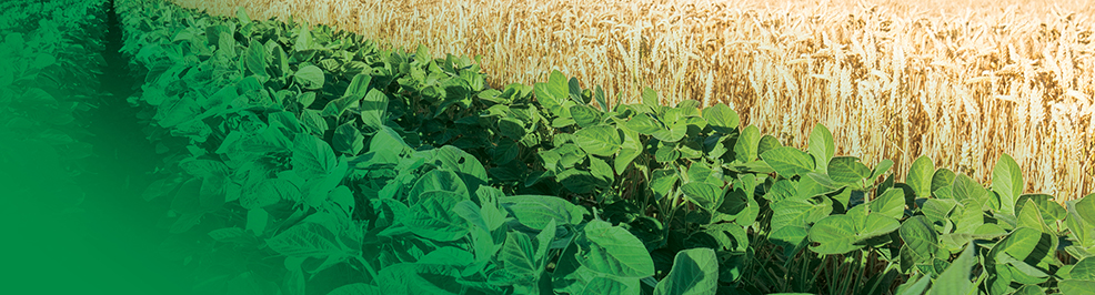 Herbicide Agriculture Horticulture Crop Protection | Nufarm
