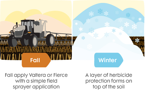 how-it-works-valtera-fierce