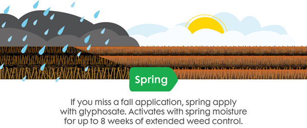 Use Valtera EZ or Fierce pre-emergent herbicide in the fall to control spring weeds