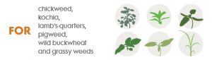 weeds controlled by Fierce pre-emergent and soil active herbicide