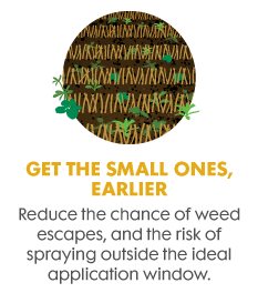 Get small weed early