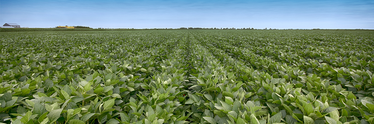 Consider the right herbicide program when selecting soybean seed