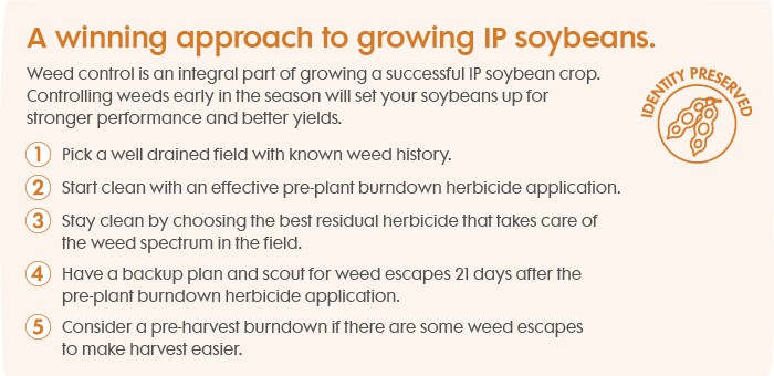 Tips to control weeds in IP soybeans